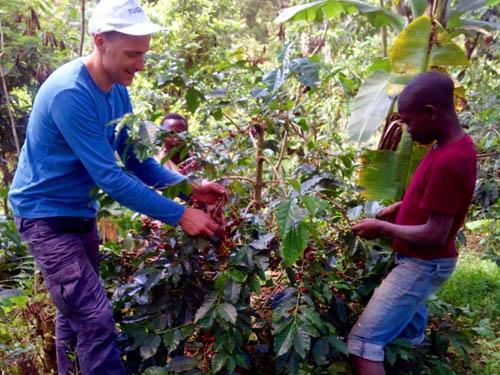 On a coffee plantation