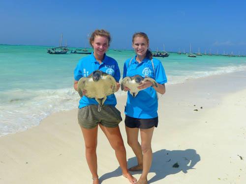 Volunteering with marine turtles