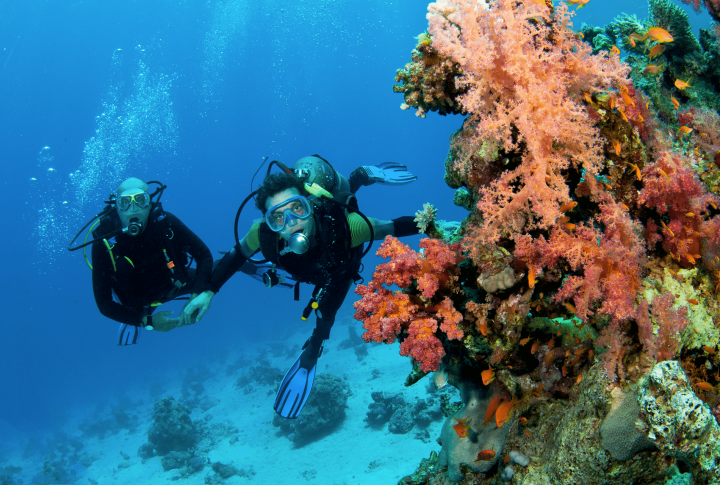 Ecotourism guidelines – Coral Reef